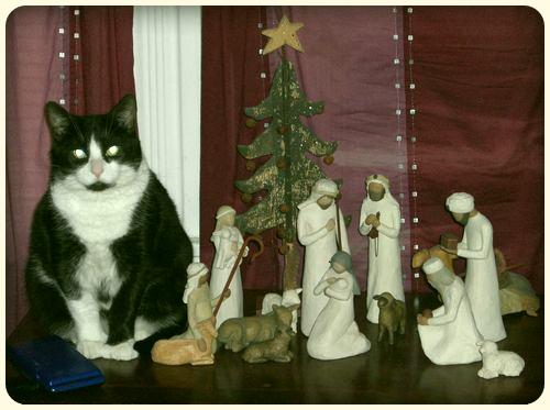 Kittie in the Manger