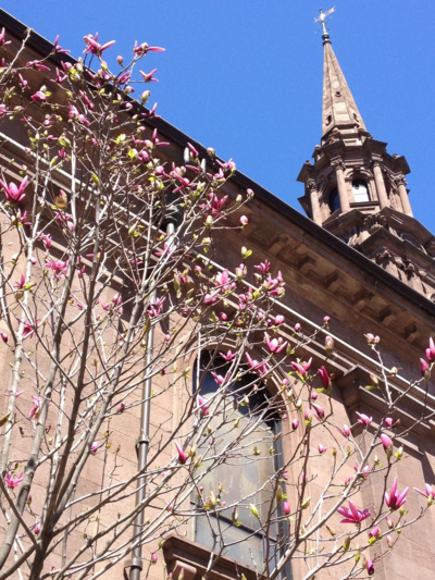 Flowering Tree, Boston